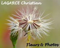 Quand vous regarderez une 'photo d'art nature' de Christian LAGARCE, imaginez que l'artiste vous offre une parcelle, un morceau, un fragment arraché à mère nature sans la blesser.